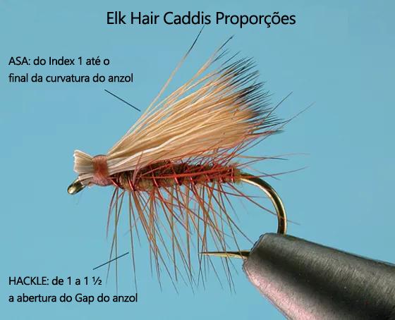 EHC-PROPORÇÕES.png